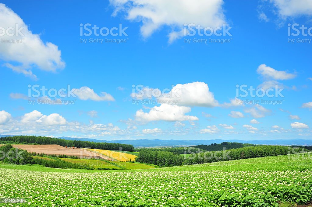Green Plantation Fields royalty-free stock photo