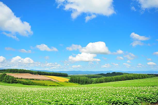 green plantation fields - 北海道 ストックフォトと画像