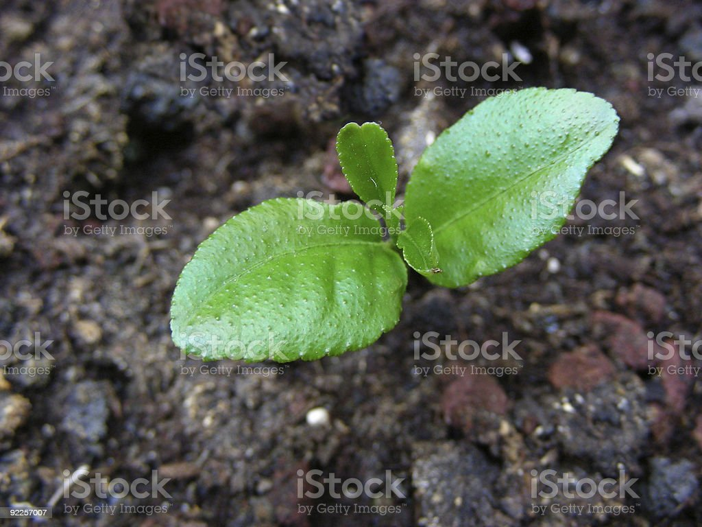 green plantlet royalty-free stock photo