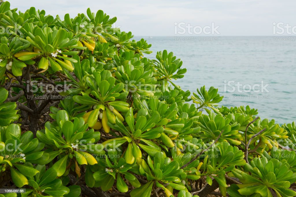 Green plants along the ocean in Oranjestad Aruba stock photo