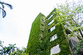 Green plants are growing on building walls.