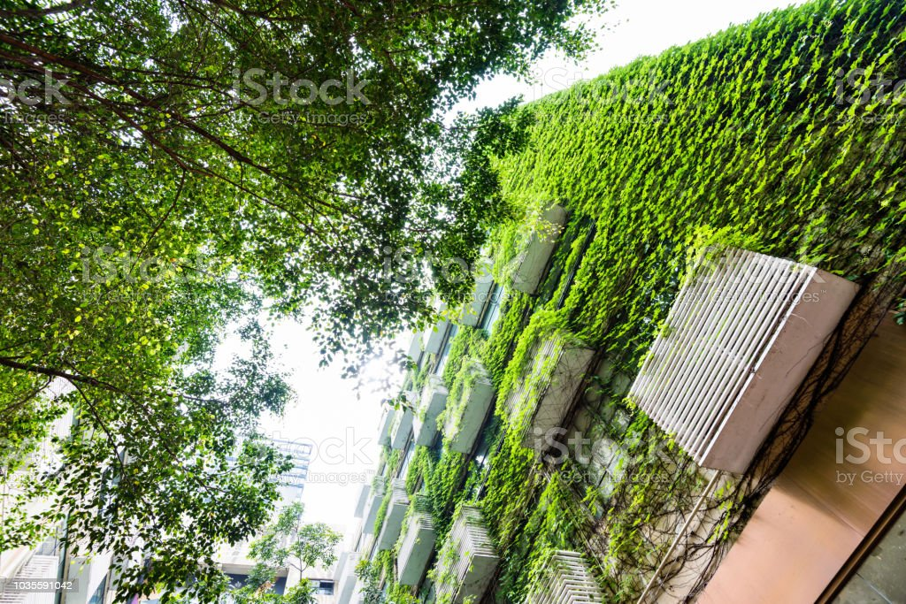 Green plants are growing on building walls Green plants are growing on building walls. Apartment Stock Photo