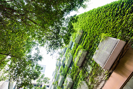 Green Plants Are Growing On Building Walls Stock Photo - Download Image Now