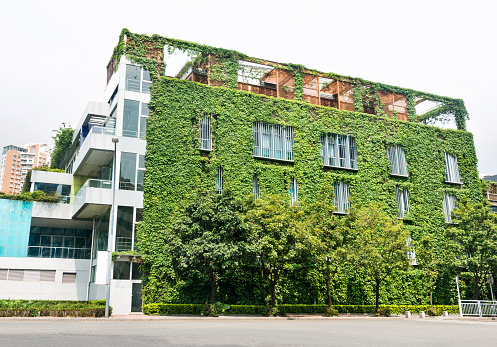 istock Green plants are growing on building walls 1189874569