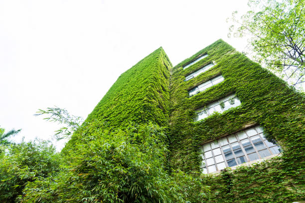 green plants are growing on building walls - ivy corporate building imagens e fotografias de stock
