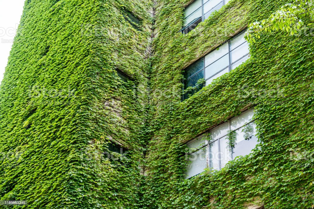 Green Plants Are Growing On Building Walls Stock Photo Download Image Now Istock