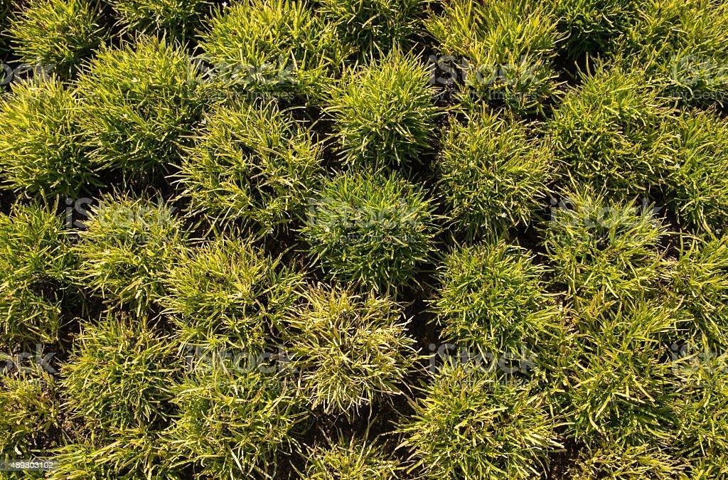 green plants background stock photo