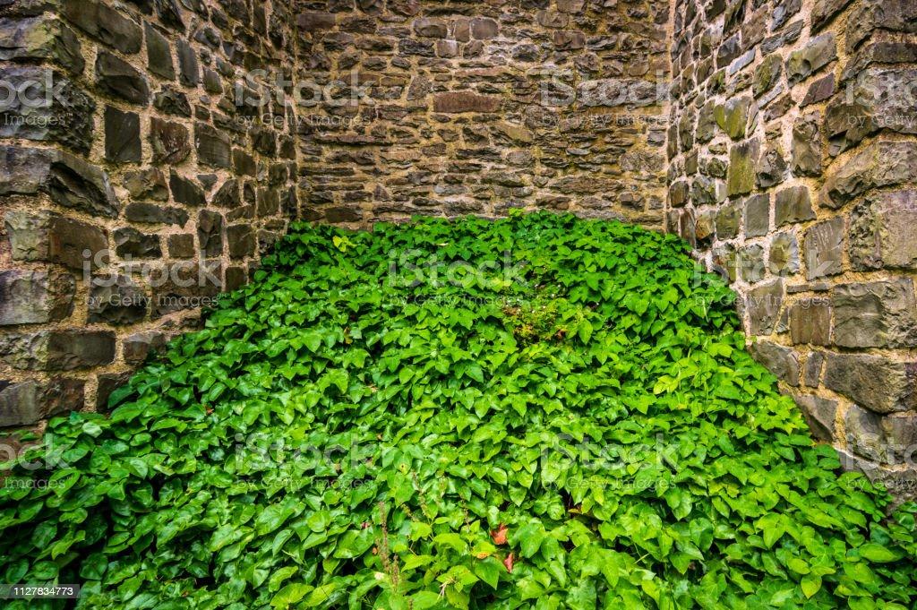 Grüne Pflanzen zwischen alten Natursteinmauern – Foto