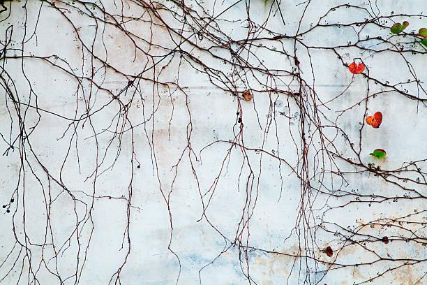 Pflanzen umrahmen die old brick wall – Foto