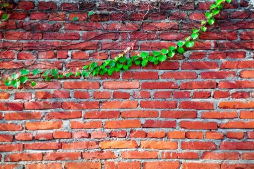 Green plants framing old brick wall