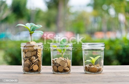 Green plants growing from the glass jars.