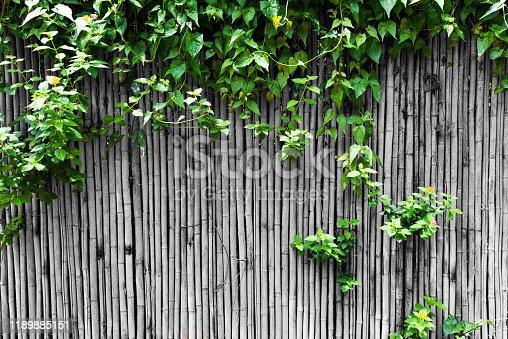 Green plants growing on bamboo fence
