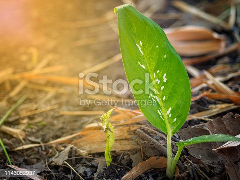 istock green plants growth. 1143052937