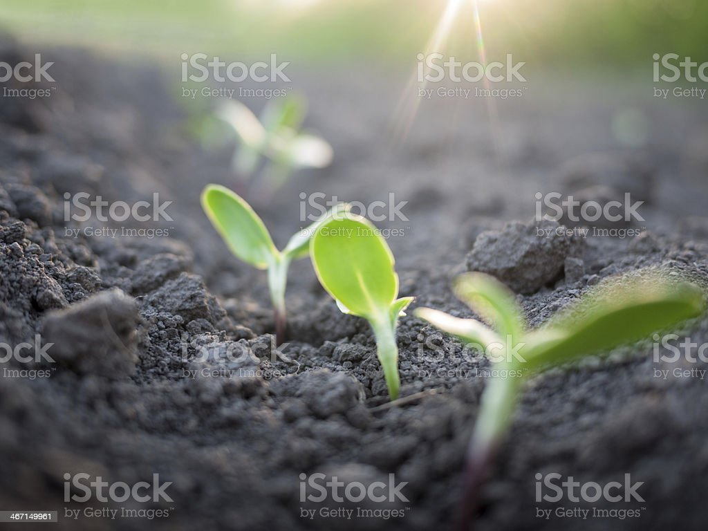 green plants growth stock photo