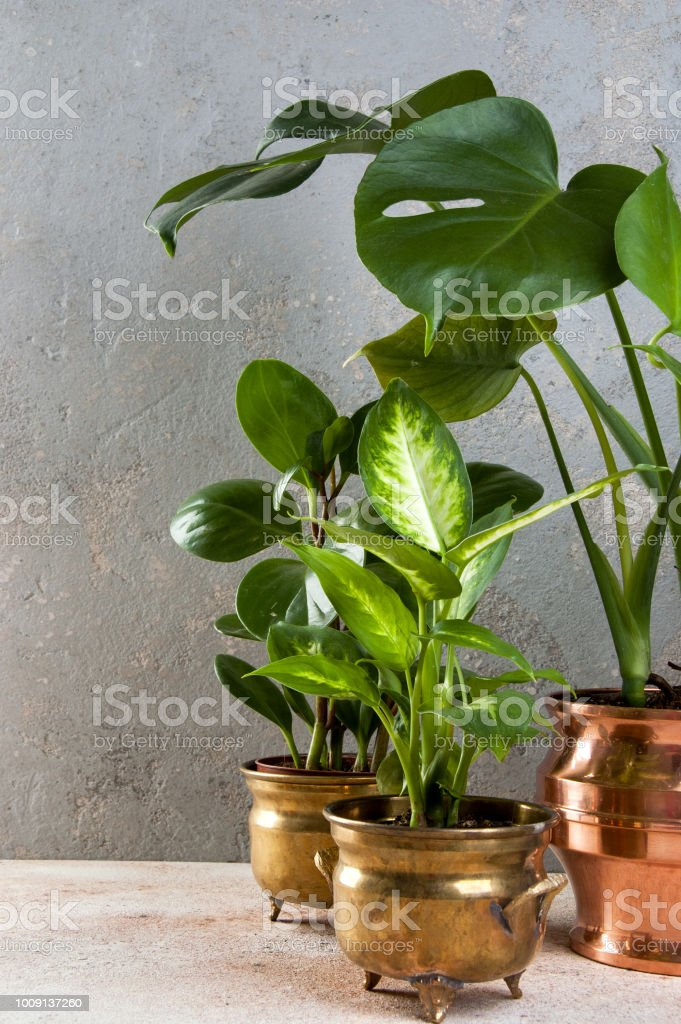 Green plants in brass and copper flower pots royalty-free stock photo & Green Plants In Brass And Copper Flower Pots Stock Photo \u0026 More ...