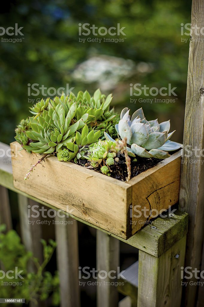 Green plants in home garden royalty-free stock photo