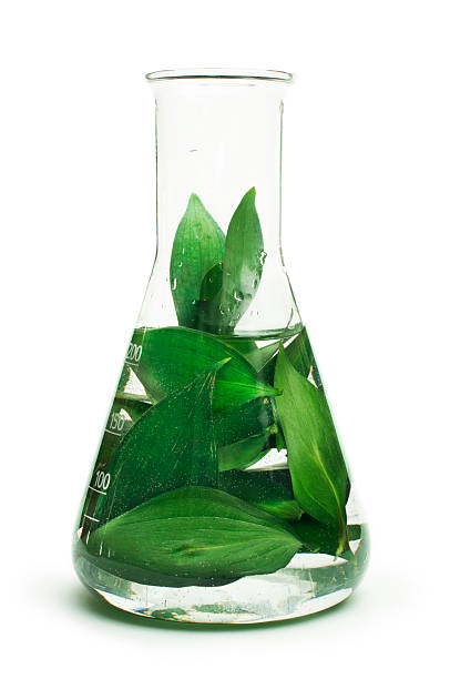 green plants in laboratory equipment - beaker stock photos and pictures