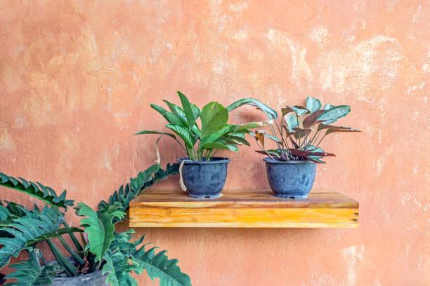 Grünpflanzen im Topf mit Lehmwand – Foto