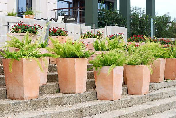 grüne pflanzen in töpfen - blumentopf groß stock-fotos und bilder