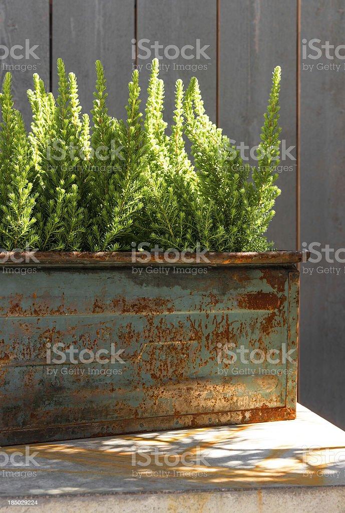 Green plants in sunlight stock photo