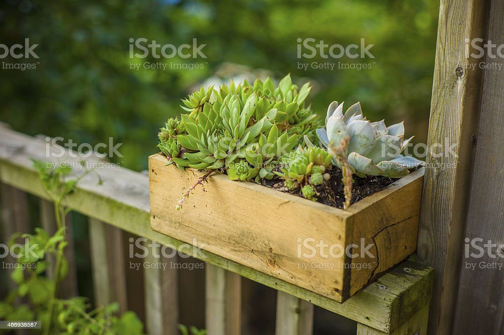 Green plants in the home garden stock photo