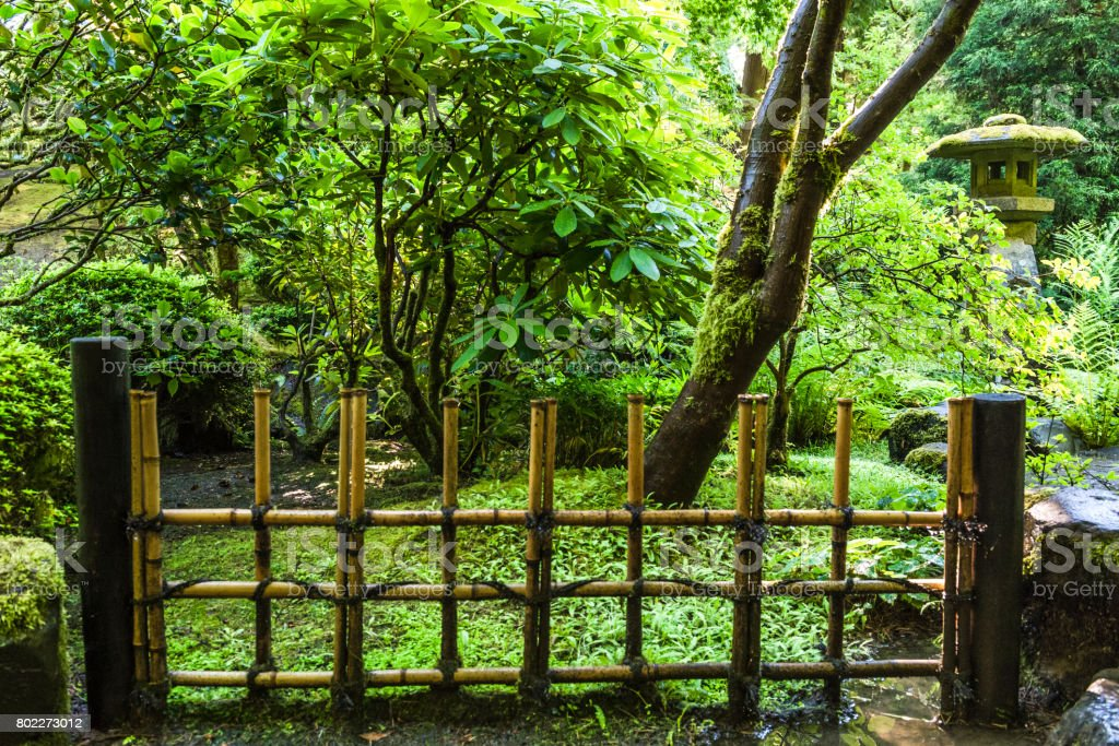 Green Plants Moss Bamboo Fence Japanese Garden Oregon  U201cCreativeContentBriefu201d 700060701 Royalty Free Stock