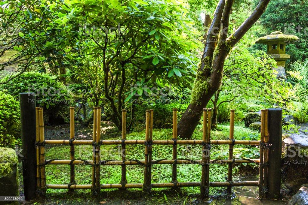 Oregon Green Plants Moss Bambou Clôture Jardin Japonais ...