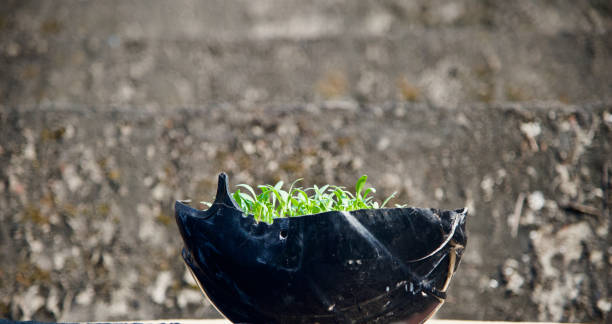 Green plants on a broken bike helmet stock photo