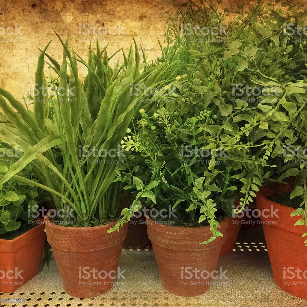 Green plants on rusty background stock photo