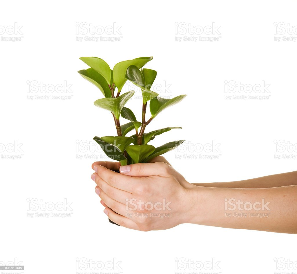 Green plants royalty-free stock photo