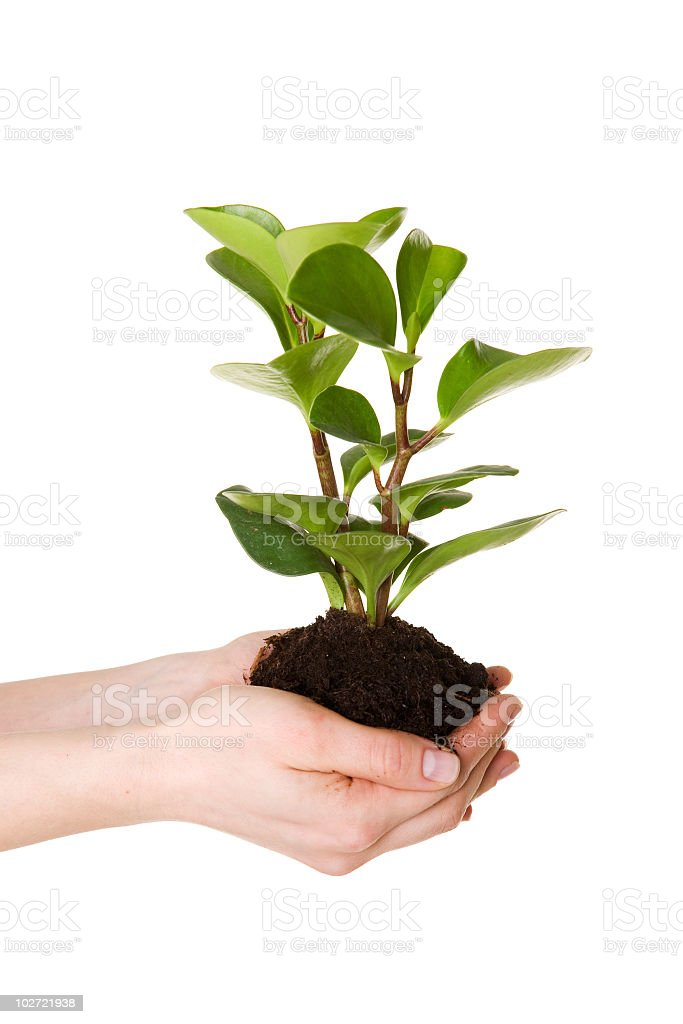 Grüne Pflanzen – Foto
