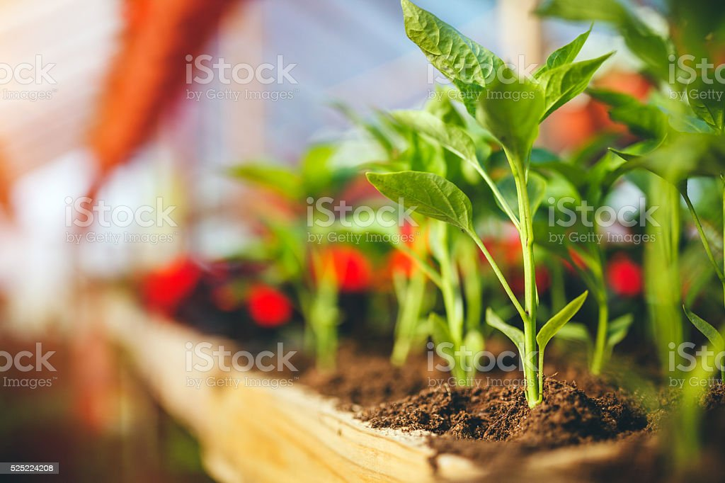 Green plants stock photo