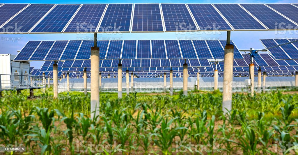 Green plants planted under solar photovoltaic panels