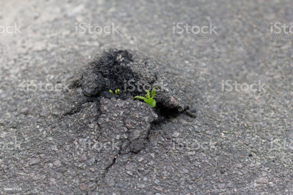 green plants sprouted in the asphalt stock photo