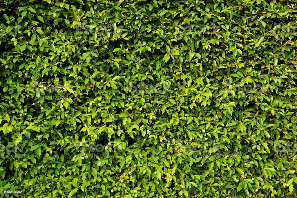 Green plants wall stock photo