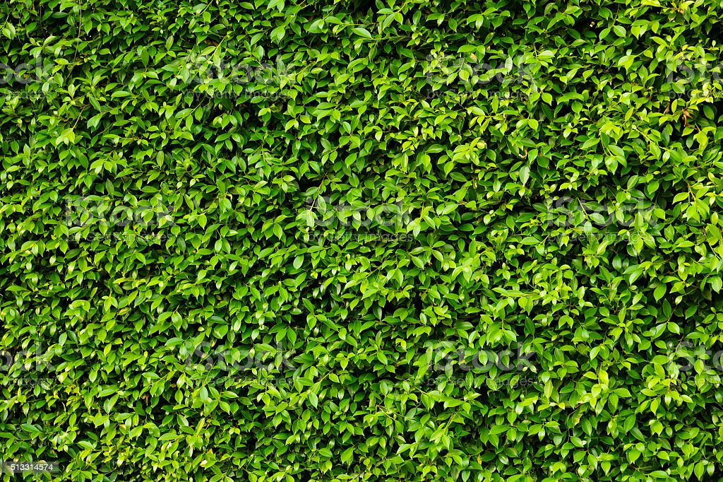 Green plants wall stock photo
