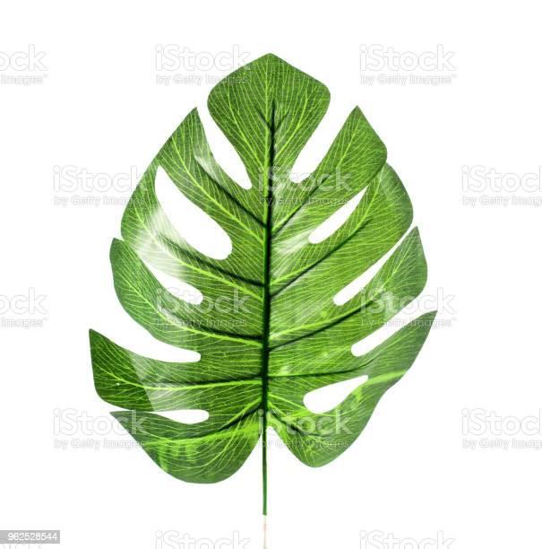 Foto de Folha De Plástico Verde Sobre Fundo Branco e mais fotos de stock de Beleza