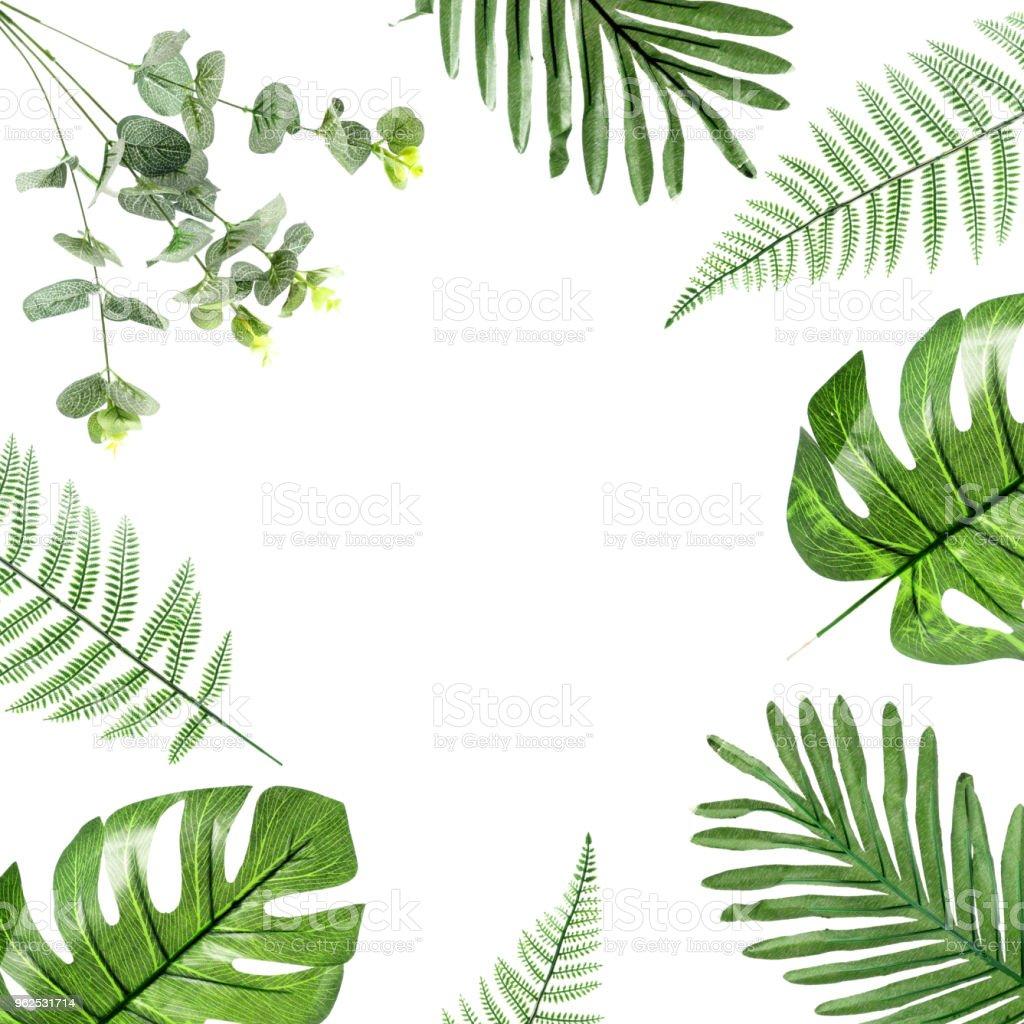 folha de plástico verde sobre fundo branco - Foto de stock de Beleza royalty-free