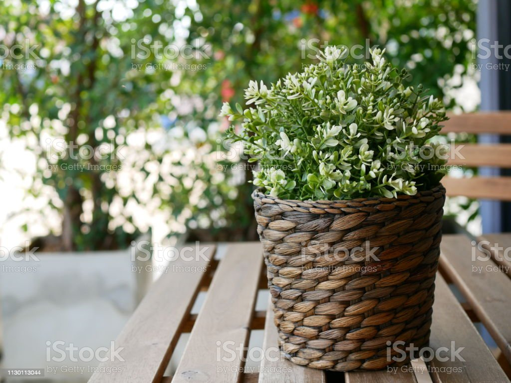 Pot Plastique Grande Taille photo libre de droit de arbre en plastique vert dans le pot banque d'images  et plus d'images libres de droit de {top keyword}