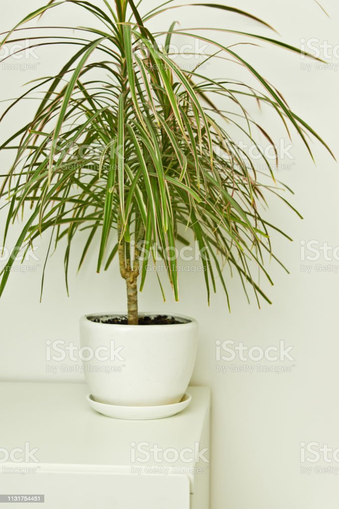 Photo Libre De Droit De Plante Verte De Pot Dans La Chambre