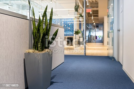 istock Green potted plant in large vase flowerpot in minimalist corporate office cubicles interior of building and nobody empty space with light exit sign corridor 1138216625