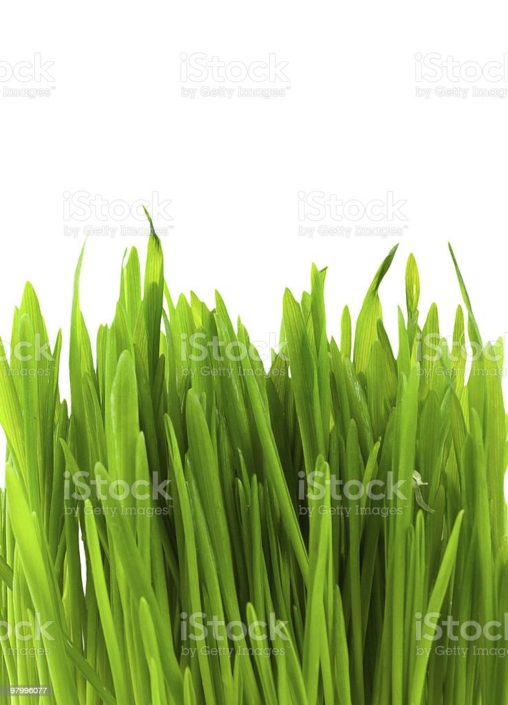 Green pratal grass royalty-free stock photo