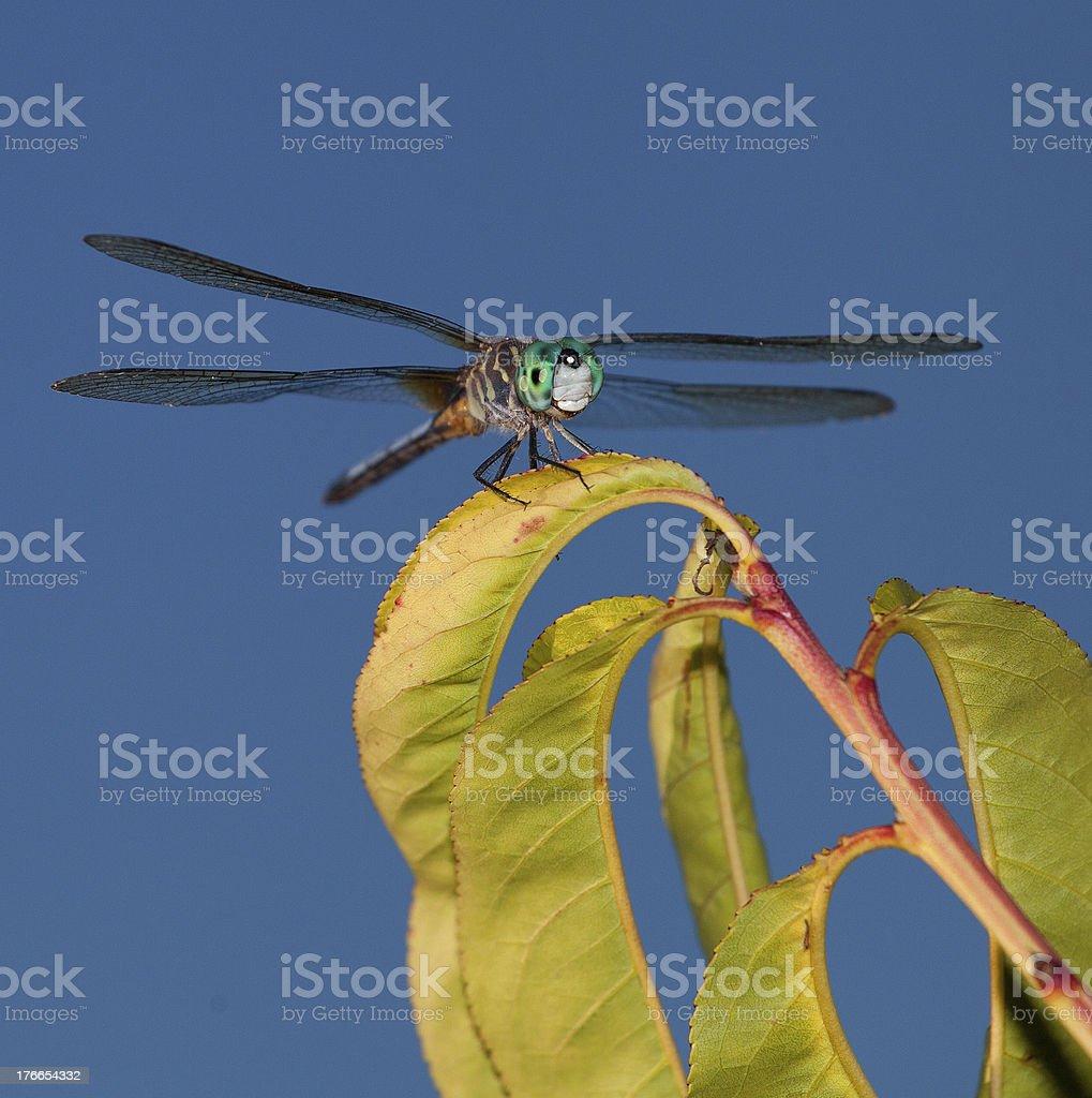 Green predator royalty-free stock photo