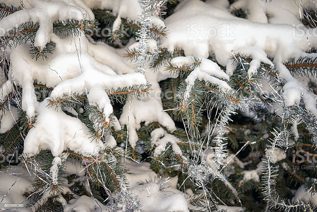 Green prickly branches of a fir-tree and snow stock photo