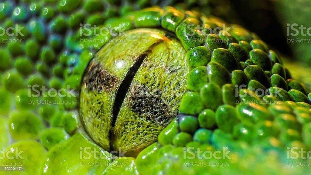 Green python (Morelia viridis). closeup of the eye stock photo