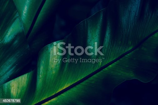 Macro shot in dark tropical rainforest