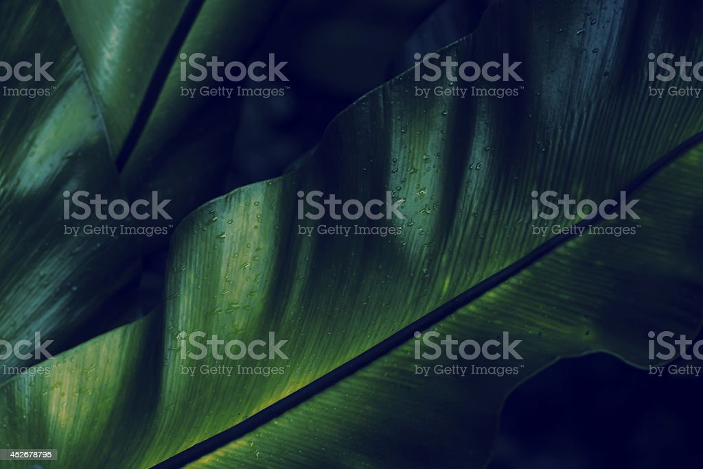 Green rainforest fern dew closeup stock photo
