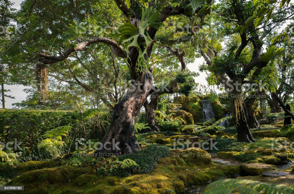 Green rainforest with old tree in thailand stock photo