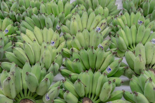 Green Raw Banana with price tag Thai Bath arranged display in Market Fresh Food Concept stock photo