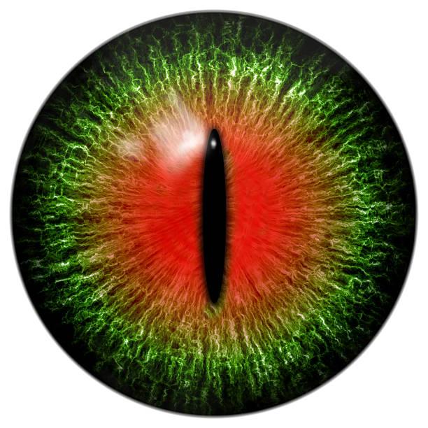 초록색입니다 아르카디아 자본가 또는 파충류 눈, 세폭 학생 - 파충류 뉴스 사진 이미지